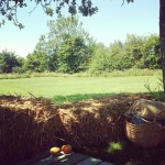 Orchard (straw bales)