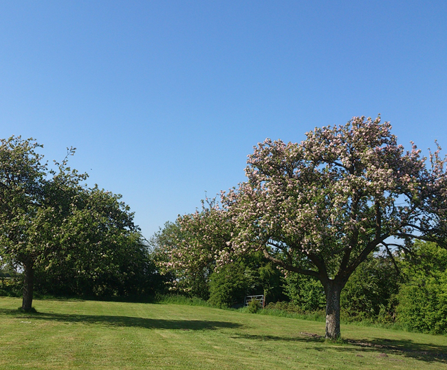 Cider House Orchard