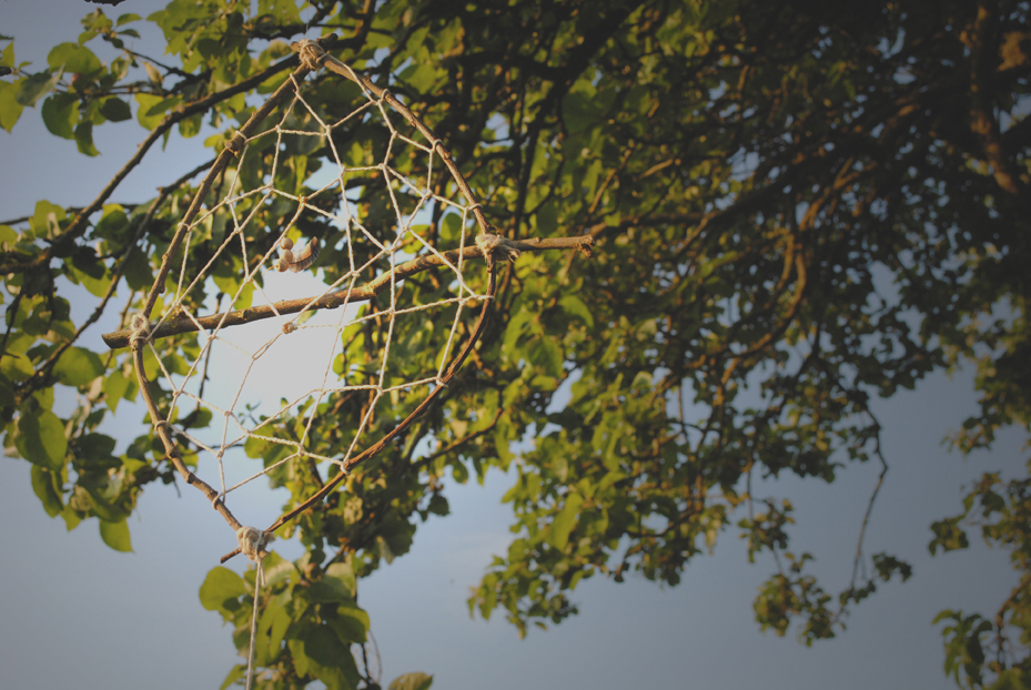 dream catcher rustic in trees blue sky